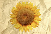Paper box textured in crumpled of sunflower. — Stock Photo