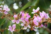 Pink flower on tree. — Stock Photo