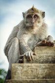 Monkey on the wall — Stock Photo