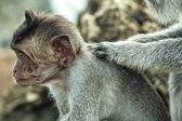 Child monkey — Zdjęcie stockowe