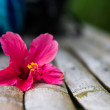 Red flower with petals on a bamboo bench — Stock fotografie