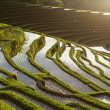 Stock Photo: Rice fields, sky with clouds and water reflections