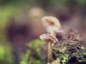 Mushrooms and lichens — Stock Photo