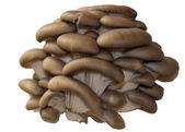 Mushrooms on a white background. — Stock Photo