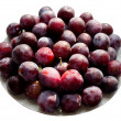 Plums on a white background. — Stock Photo