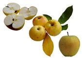 Jesienią jabłka. — Zdjęcie stockowe