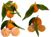 Mature Sweet Tangerine. — Zdjęcie stockowe