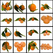 Mature Sweet Tangerine. — Stock Photo