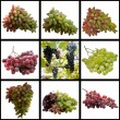 Stock Photo: Clusters of Ripe Grapes.