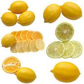 Lemons and Oranges. — Stock Photo