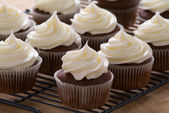 Chocolate cupcakes with cream cheese frosting — Photo