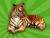 Tiger on Green Background — Stock Photo