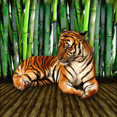 Tiger on Wood Backdrop — Stock Photo