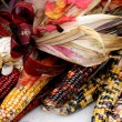 Indian Corn with Ribbon — Stock Photo