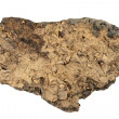 Fossils Galore In This Rock — Stock Photo
