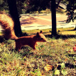 ストック写真: Squirrel in the park