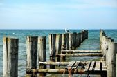 Groynes in the ocean and seagulls — Stock Photo