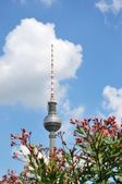 Berlin television tower and flowers — Stock Photo