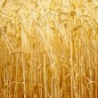 Stock Photo: Golden Grain