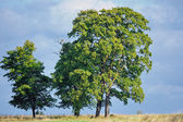 Majestic Trees — Stockfoto