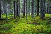 Wilden landschaft — Stockfoto