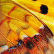 Stock Photo: Wing of butterfly