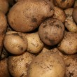 Patate - Stock Photo