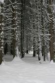 Winter snowy trees — Stock Photo