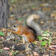 Stock Photo: Squirrel in forest