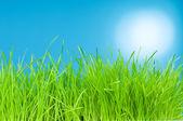 свежая зеленая трава на синем фоне — Стоковое фото