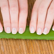 Female hands with french manicure and Aloe leaf on bamboo background - Stock Photo