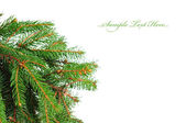 Pine branches isolated on white background — Stock Photo