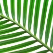 Palm branch isolated on white — Stock Photo