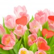 Tulips with red heart isolated on white background — Stock Photo