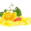 Yellow rose and heart isolated on white background — Stock Photo