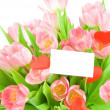 Tulips with greeting card isolated on white background — Stock Photo