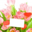 Tulips with greeting card isolated on white background — Stok fotoğraf