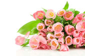 Pink tulips isolated on white background — Stock Photo