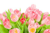 Pink tulips isolated on white background — Stok fotoğraf