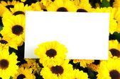 Greeting card in the Chrysanthemum — Stock Photo