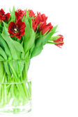 Bouquet of tulips in the vase — Stock Photo