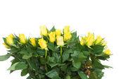 μπουκέτο τριαντάφυλλα που απομονώνονται σε λευκό φόντο — Φωτογραφία Αρχείου