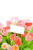 Tulipanes con tarjeta de felicitación aislado sobre fondo blanco — Foto de Stock