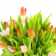 Pink tulips isolated on white background — ストック写真
