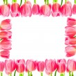 Tulips isolated on white background — Stock Photo