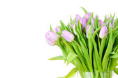 Bouquet of tulips in the vase isolated on white background — Stock Photo