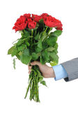 Man hand holding bunch of red roses isolated on white background — Stock Photo