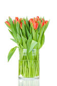 Tulips in the vase against white background — Stock Photo