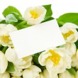 Stock Photo: Bouquet of tulips with greeting card isolated on white background