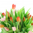 Pink tulips isolated on white background — Stock Photo